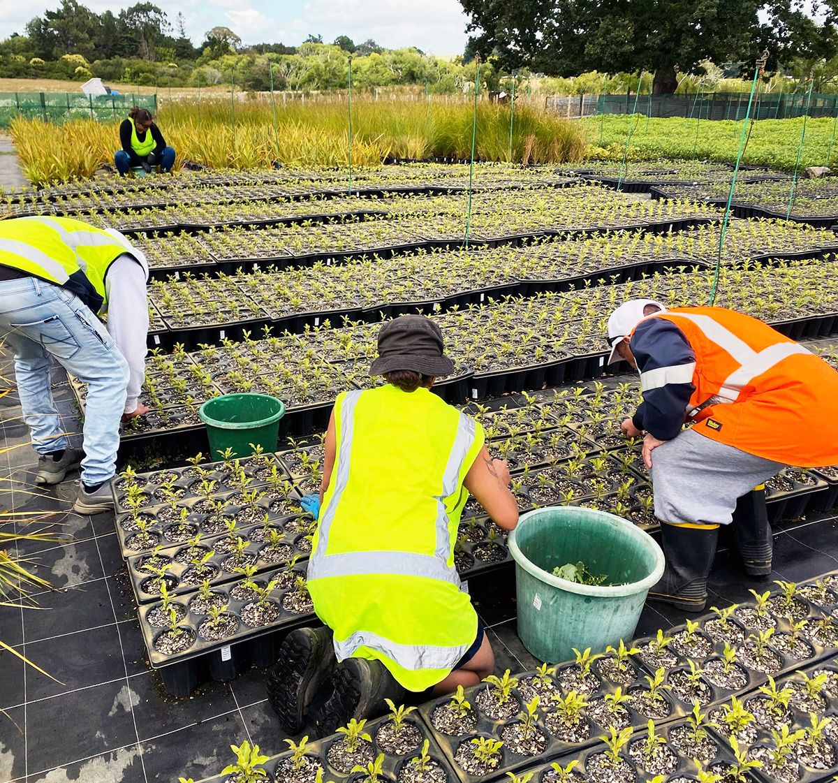 A group of people in bright safety vests work outdoors at a plant nursery, removing weeds from around many rows of seedlings.