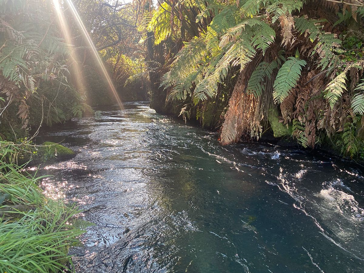 A beam of sun shines onto the sparkling Waihou River, passing through forested and grassy banks.
