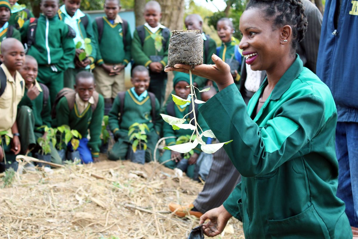 A woman holds up an upside-down seedling as a demonstration to a group of schoolchildren.