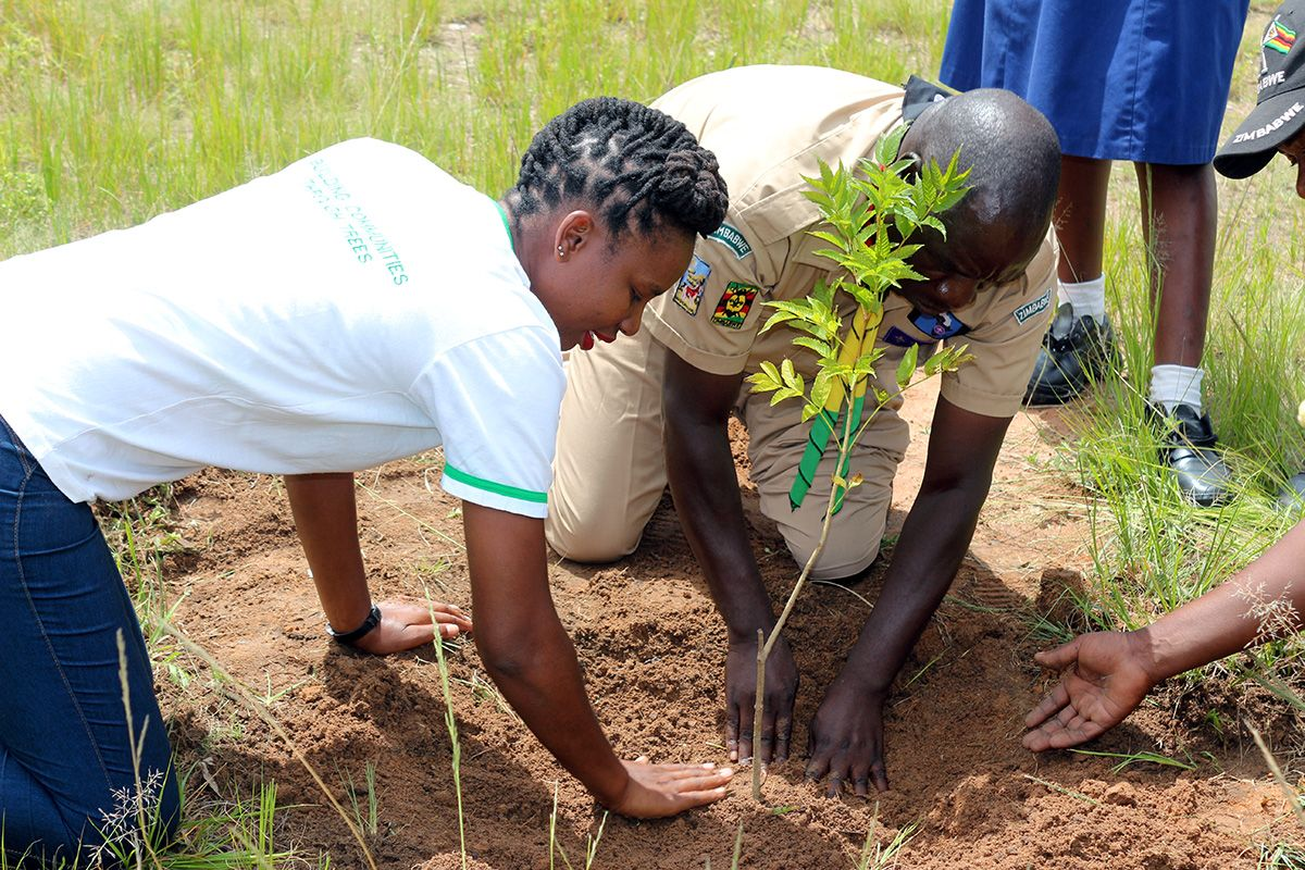 Two people on their hands and knees planting a young tree into the soil.