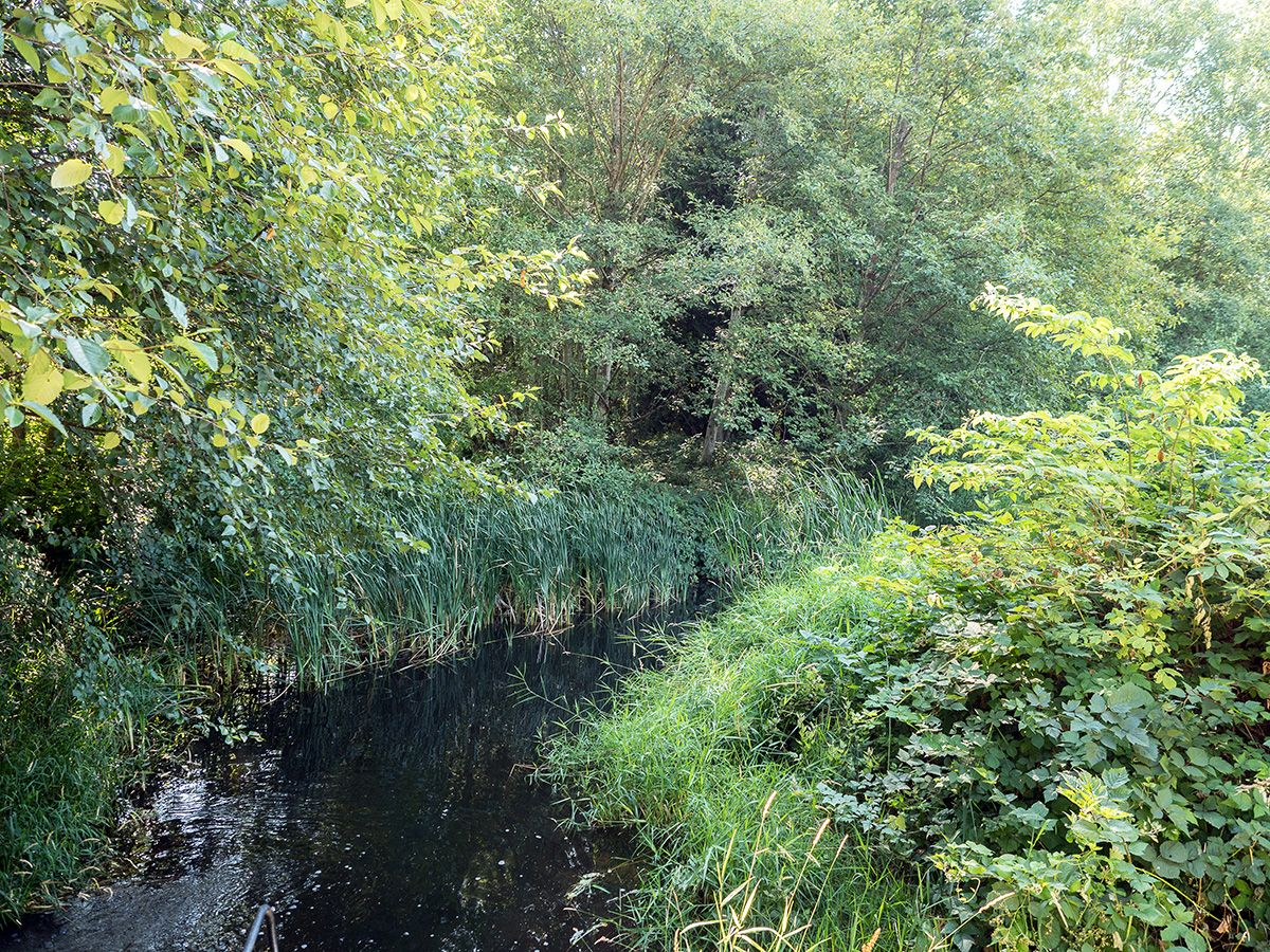 A narrow stream with rich greenery on either side: reeds, shrubs, grasses and trees.
