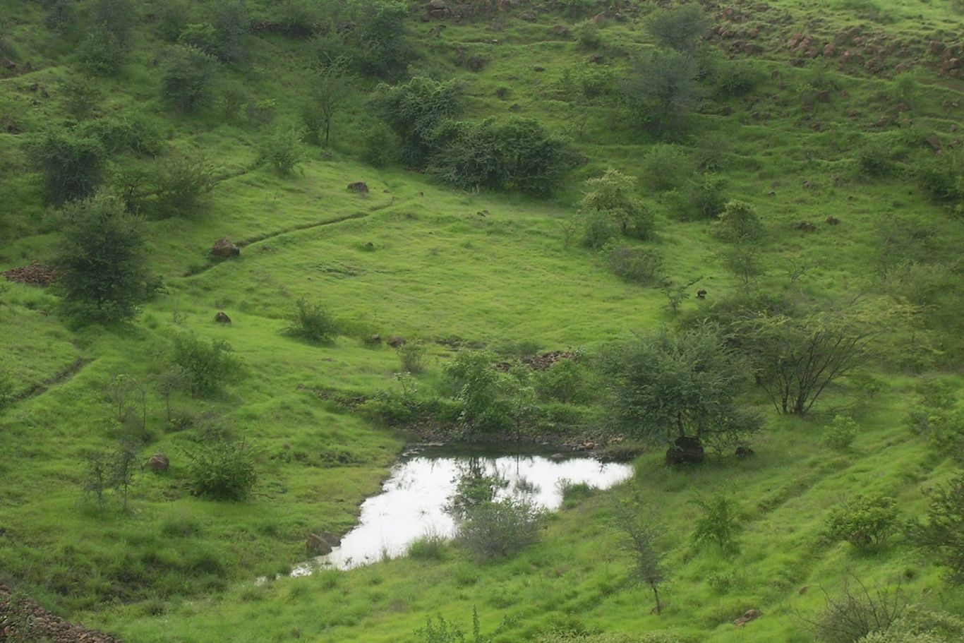 Lush green landscape with rolling hills, trees and a pond in Lamkani, India.